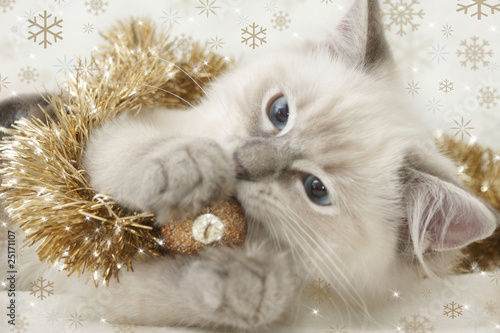 Papiers peints Lynx kitten playing with xmas bauble