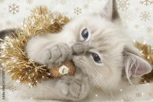 Fotobehang Lynx kitten playing with xmas bauble