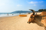 Cow on beautiful tropical beach in Asvem , India