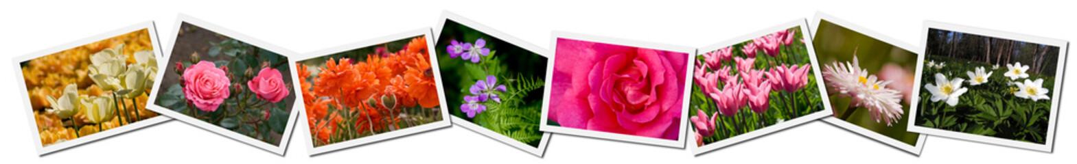 Collage of flower photographs