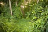 Lush jungle greenery poster
