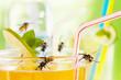 Leinwanddruck Bild - yellow jackets at drinking glass with apple spritzer  02