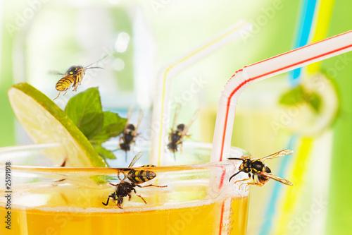 Leinwanddruck Bild yellow jackets at drinking glass with apple spritzer  02