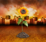 City Destruction with Nature Sunflower Growing poster