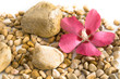 Hibiskusblütenarrangement