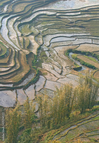Traditional Ladder Farming, Rice Paddle Fields, in Sapa Vietnam