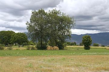 Rolling haystacks.