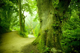 Fototapety Forest Pathway