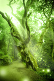 Fototapety Enchanted Forest