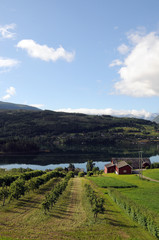 Farmland around Hardangerfjord, Norway