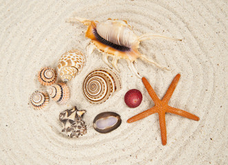 Sea Shell varieties