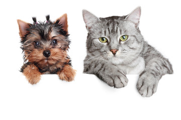 Portrait of a cat and dog, isolated on a white background