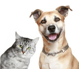 Cat and dog - Fine Art prints