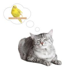British cat dreams of a bird