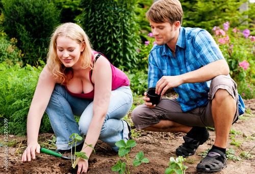 Gärtnern - Erdbeeren pflanzen