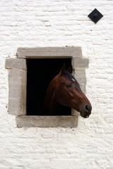 Cavallo alla finestra