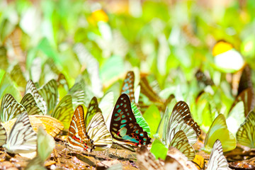 Colourful of wings