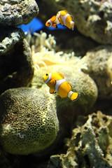 Manila Aquario Philippines
