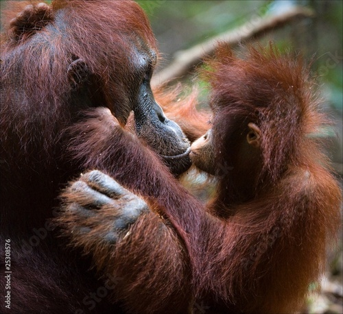 Foto op Canvas Aap Kissing mum.