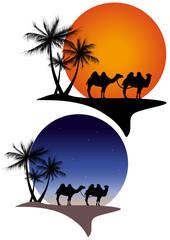 Oasi con cammelli notte e giorno