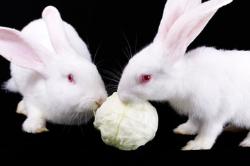 Two rabbits and cabbage