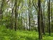 Laubwald im Mühltal