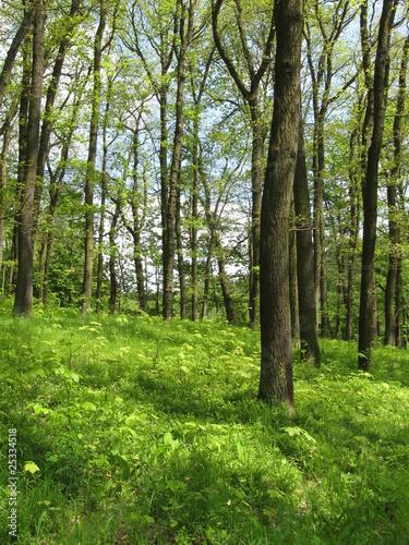 Laubwald im Mühltal II