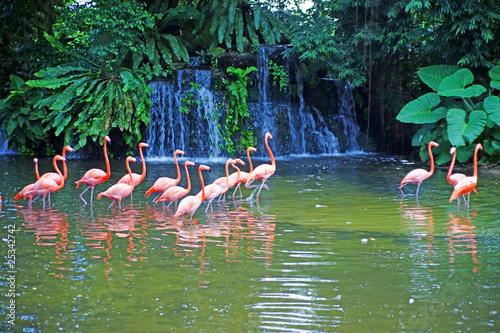 Foto Spatwand Flamingo Pink flamingos on lake with waterfalls in rainorest.