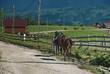 rientro dal lavoro con i cavalli