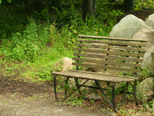 Wooden seat in damp garden with copy-space to left