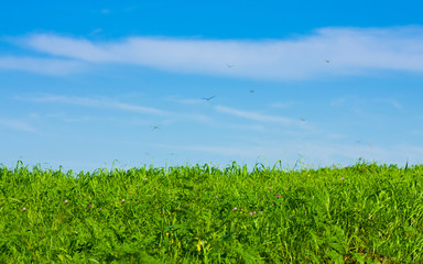 green meadow under the blue sky