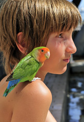 Miniature Parrot on a Child's Shoulder