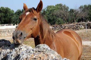 Cavallo in masseria