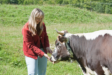 Young woman feeding a cow