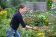 Frau schneidet ein paar Blumen im Garten