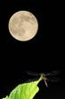 満月とトンボ