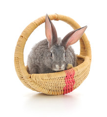 Little rabbit in a basket