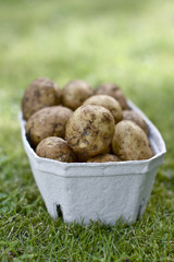 potatos in a box with green grass