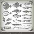 Vector set: fish