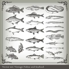 Vector set: fish
