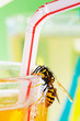yellow jacket at drinking glass with apple spritzer  03