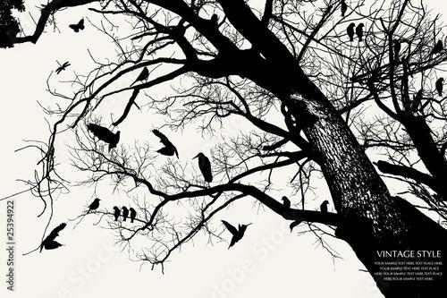 Fototapeten,tier,vögel,stutzen,entwerfen