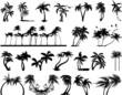 Palm Tree silhouettes - 25400758