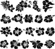 Hibiscus flower silhouettes - 25400759