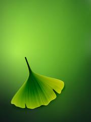 vector ginkgo leaf