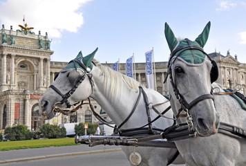Fiaker Pferde, Wien