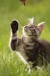 Katze greift nach Leckerli