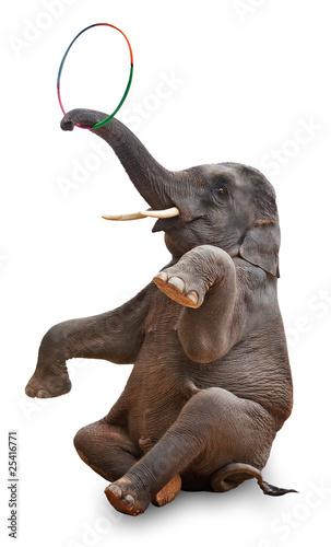 Fotobehang Olifant akrobatischer Elefant freigestellt