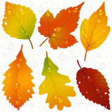 Fototapety Vector autumn leaves and seamless vein background