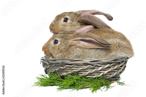 two rabbits in a basket and vegetables